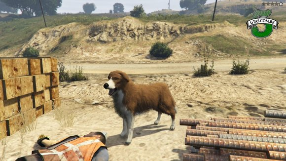 Border Collie GTA 5